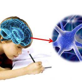 Diplomado en Escritura Inteligente